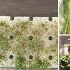 アクアリウム:水草を育てる土台の検討の結果は?