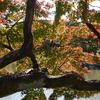 鶴舞公園 2020.11.11