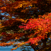 富士山麓で紅葉撮影!!これで今年の紅葉も見納めです (^^;) 山中湖編