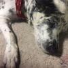 体力の弱った老犬の感染症を予防するワクチン以外の方法