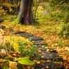 観光業はこの紅葉の時期に客が戻らないと冬は越せない気がする。
