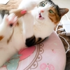 【愛猫日記】毎日アンヌさん#92