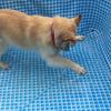 1匹犬のアルリム