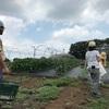 横浜の羽沢にある農家さんに野菜収穫体験へ。
