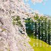 明日21日は春分の日!彼岸の中日でもあるので、お墓参りにいきましょう。