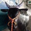 【肉】米沢駅徒歩0分でステーキ 日本三大和牛の米沢牛を食べる【山形】