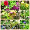 3月『つる植物の園 管理カレンダー』