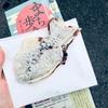 鳥取旅行にいってきた