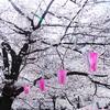 続)目黒川の桜をルミックスDMC-GM1で撮影♪