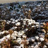 信州は4月の雪