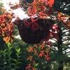 ミニすだれの活用 🍁DIY秋色壁飾りフラワー