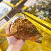 2017年7月13日 小浜漁港 お魚情報