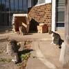 盆栽園の「成勝園」で猫軍団を愛でてきた