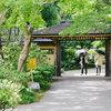 子供と歩く公園散歩 『昭和記念公園 日本庭園の花菖蒲』