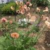 2020年6月「天使が遊ぶ庭」作業日誌