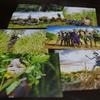 【雑記】 ゴールデンに少数民族を愛する写真家 ヨシダナギさん登場
