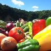 夏野菜といえば!種類や栄養は?