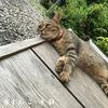 京都・梅宮大社の猫ツキとシマにまた会いにいってきました