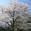 春のさすらい九州旅行[熊本 阿蘇] DAY5