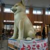 秋田犬、でかっ!!