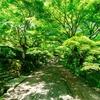 新緑の京都 常寂光寺