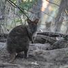 タスマニア〜で動物探し‼︎ アニマルな1日