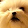 今からあなたは犬です。〜世界平和とモテ術〜