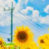貴金属と夏枯れ相場の関係