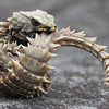 とにかくかわいい爬虫類を9種類ほど厳選したから紹介したい!