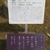 万葉歌碑を訪ねて(その1117)―奈良市春日野町 春日大社神苑萬葉植物園(77)―万葉集 巻十一 二七五九