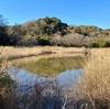 池子の森の池(神奈川県逗子)
