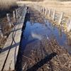 冬晴れの湿原じゃ