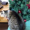 クリスマスツリーの楽しみ方