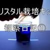 【クリスタル栽培キット】観察日記①