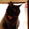今日の黒猫モモ&白黒猫ナナ♪
