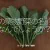 780食目「この葉物野菜の名前はなんでしょうか?」(ヒント)産地:福岡