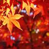 夏の終わり、秋の気配