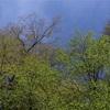 新緑①  姉川