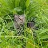 草刈り前と草刈り後の猫散歩