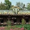 米フロリダにある「ディズニー・アニマル・キングダム」で写真を撮るときに絶対気をつけるべきこと