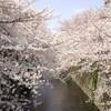 【まとめ】お花見に役立つアプリ4選