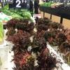 高級山菜「香椿(チャンチン)」