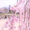春(25)