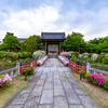 京都・岩倉 - 妙満寺境内を彩るツツジ