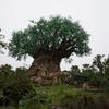 オーランド ウォルトディズニーワールドへ行こう(1日目:ディズニー・アニマルキングダム1) / Trip to Walt Disney World, Orlando (Day 1 : Disney's Animal Kingdom)
