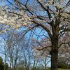 東武動物公園さんと桜