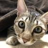【猫ブログ】奇跡の一枚。 サラ篇