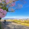 【観光】宮川千本桜と伊佐須美神社。両親を連れていきたいお花見スポット情報。