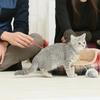 保護猫に出会ったら 第6回 ー届け出るべきところー