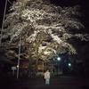 桜舞う季節 1 元号の発表